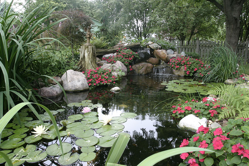 Aquatic plants provide filtration for your backyard pond