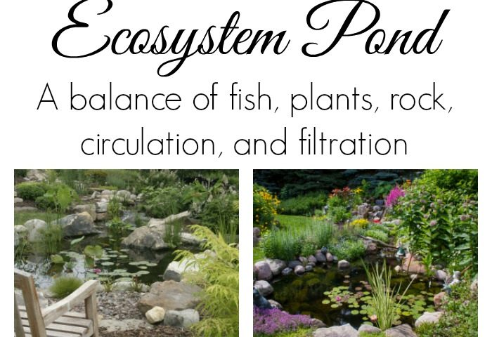 Ecosystem Pond Guide
