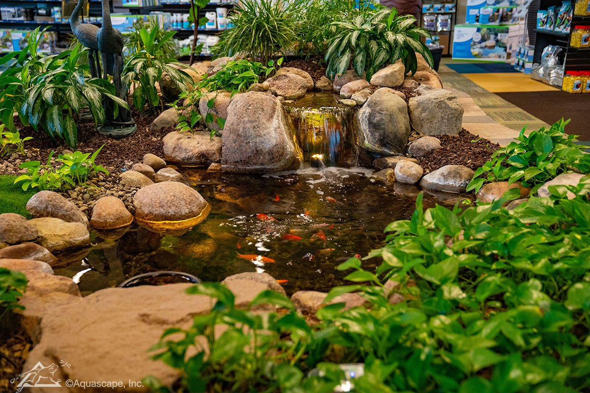 The small pond in our Water Gardening Store is perfect for small fish and aquatic plants
