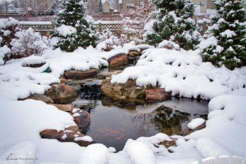 Koi pond in Winter