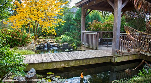 Koi pond in the Fall