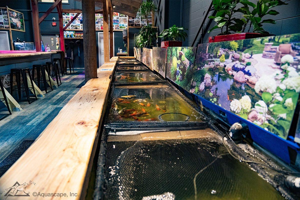 Pond Fish Experience