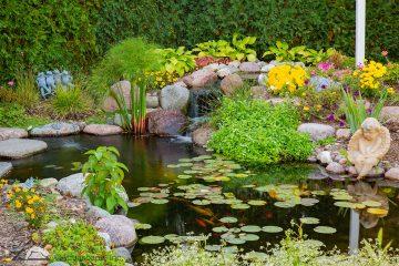 Koi pond in Spring