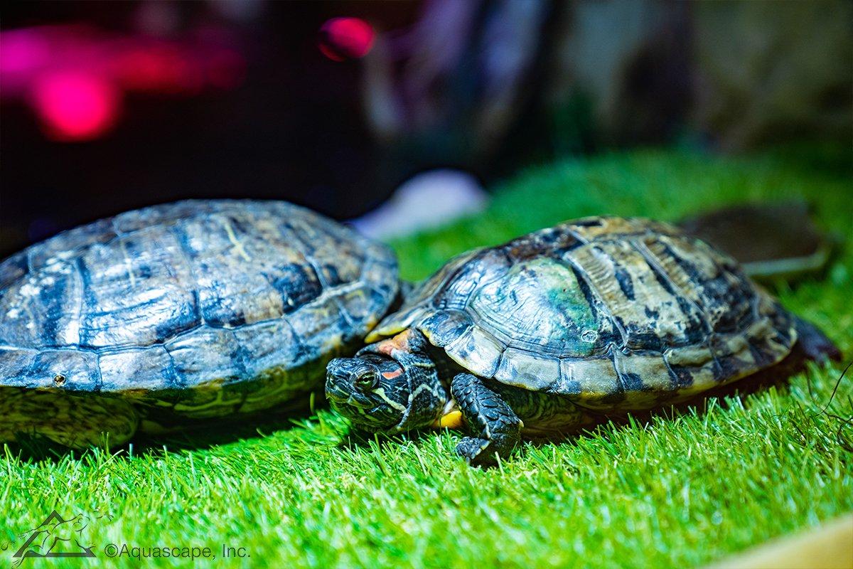 Greg's Turtletopia