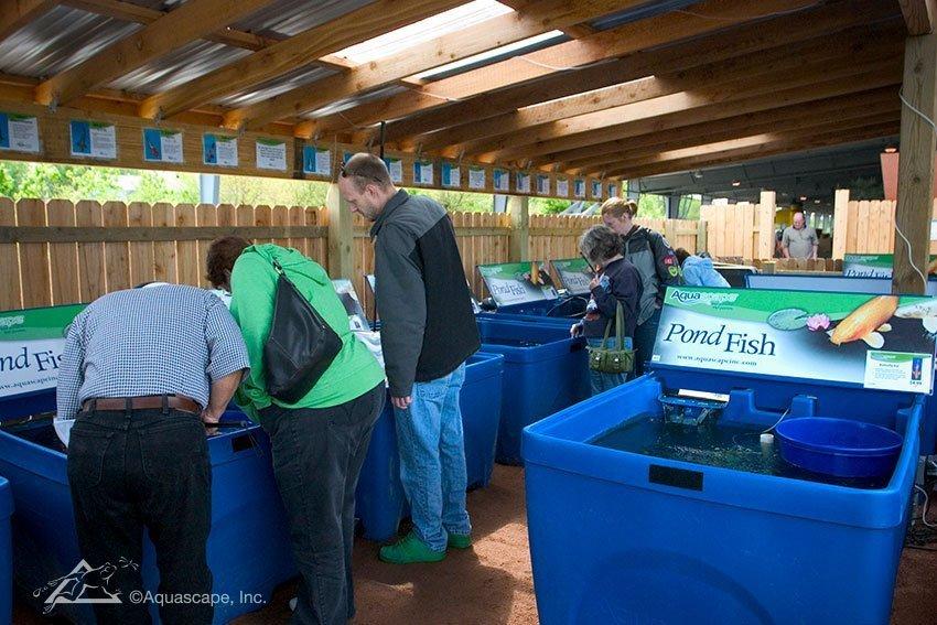 Buying pond fish at Aqualand